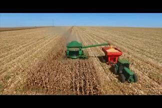 Colheita do milho safrinha é feita por produtores rurais em MG - Especialistas afirmam previsão de safra recorde de milho este ano.