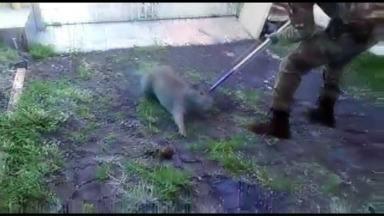 Capivara é apreendida em casa no centro de Marialva - Vídeo mostra que o animal estava bastante assustado