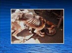 Homem suspeito de maus-tratos a cachorros é detido em Caruaru, no Agreste - Na casa dele foram encontrados mais de 10 animais em situação crítica. Bichos foram recolhidos pela GPA e estão disponíveis para adoção.