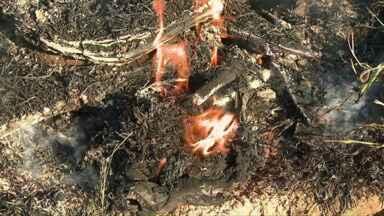 Número de incêndios em Cascavel preocupa - A pratica antiga de atear fogo em lixo é o que as autoridades querem combater.