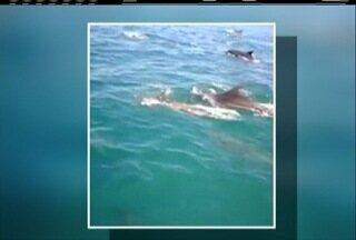 Turistas registram passagem de grupo de golfinho em Arraial do Cabo, no RJ - Área em que foi realizado o registro é perto da Ilha do Farol.