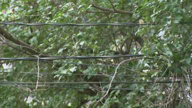 Galhos e fios de alta tensão podem causar problemas pra quem mora perto - Moradores da Vila Maracanã em Foz já sofreram apagões por causa dessa proximidade