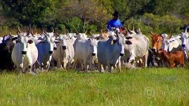 Produção de gado orgânico usa homeopatia e remédios naturais - Busca por boi e frango orgânicos aumenta no Brasil. Carne livre de química requer cuidados, mas pecuaristas garantem que esforço vale a pena.