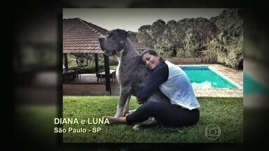 Telespectadores do 'Encontro' enviam fotos e vídeos com seus cachorros gigantes - Confira as imagens fofas