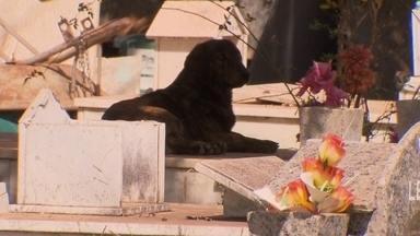 Muitos cachorros no DF escolhem o cemitério do Gama para morar - Os animais no cemitério incomoda alguns frequentadores. A segurança diz que improvisa, mas os cães voltam ao local.