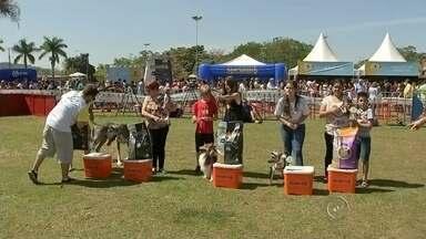 Milhares de pessoas participam do Estimacão em Jaú - Muita gente aproveitou o domingo para um passeio diferente em Jaú. O parque do rio Jaú recebeu milhares de pessoas para o Estimacão. Uma manhã de total interação entre os donos e cães.