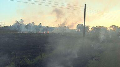 Fogo atinge estação experimental em Ribeirão Preto, SP - Vento dificultou o trabalho dos bombeiros, que utilizaram abafadores para controlar as chamas.