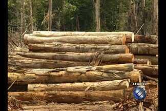 19 pessoas são presas no PA suspeitas de envolvimento no comércio ilegal de madeira - Segundo as investigações, o grupo fraudava documentos para elaborar planos de manejo e assim conseguir créditos florestais.