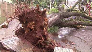 Árvores e postes caem durante temporal em Maringá - Dia amanheceu com céu escuro, parecia noite.