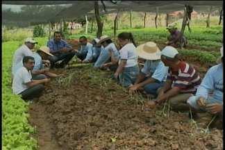 Na cidade de Cedro-PE, um projeto tem dado exemplo de inclusão - Um engenheiro agrônomo ficou interessado em ajudar filhos de agricultores que têm algum tipo de deficiência.