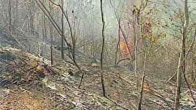 Incêndio atinge vegetação no interior de Rio bananal, no Norte do ES - Comunidade de Cedro foi atingida por incêndio.