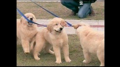 Centro de Formação de Cães-Guia de SC cadastra famílias socializadoras - Centro de Formação de Cães-Guia de SC cadastra famílias socializadoras
