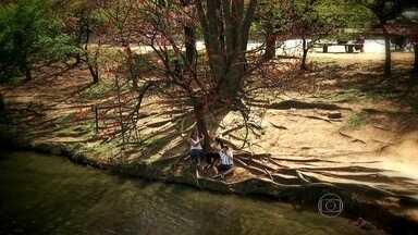 Cartas de amor ajudam a salvar árvores da seca em cidade da Austrália - No início do ano, Melbourne enfrentou uma seca muito severa e as árvores começaram a morrer. Os moradores do lugar conseguiram salvar o verde escrevendo cartas de amor.