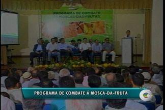 Ministério da Agricultura lança plano de combate à Mosca-da-fruta - A ministra Kátia Abreu esteve em Petrolina para falar das novidades desta iniciativa.