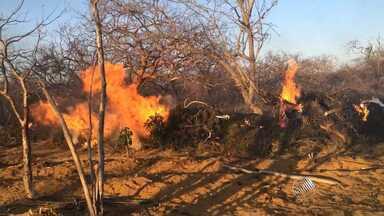 Polícia apreende e incinera 11 toneladas de maconha no norte do estado - É a maior apreensão da droga já realizada em uma propriedade rural na Bahia.