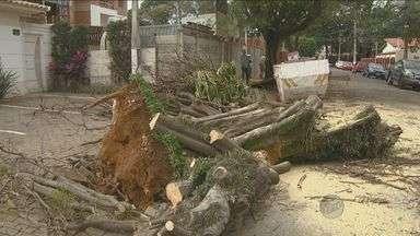 Mais de 24 horas depois de tempestade, estragos continuam visíveis na região de Campinas - Chuva e vento intensos provocaram alagamentos, queda de árvores e falta de energia elétrica em cidades da região de Campinas (SP).