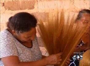 Festa marca início da colheita do capim dourado no Jalapão - Festa marca início da colheita do capim dourado no Jalapão