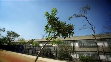 SPTV visita bairros que tiveram árvores plantadas no projeto Verdejando - O projeto plantou 1.430 árvores em vários bairros desde 2013. O vandalismo é responsável pela morte de 10% das mudas plantadas na cidade.