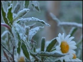 Geada cobre Erechim na manhã deste sábado, 12 - Temperatura mínima foi de zero grau na cidade.