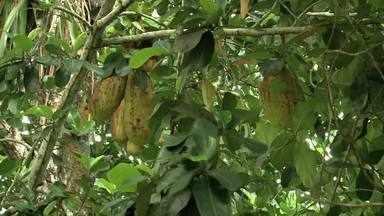 Fiscalização vistoria produção de orgânicos no Vale do Mundaú alagoano - Mais de 50 agricultores do Vale do Mundaú estão certificados como produtores de alimentos orgânicos.