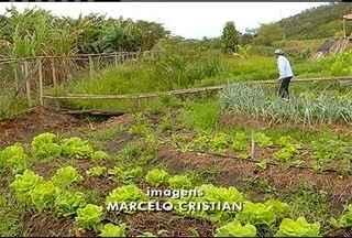 Produção agroecológica integrada dá certo em Silva Jardim, RJ, e agricultores têm lucro - Implantação da atividade é de apenas três meses.