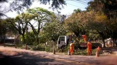 Verdejando traz um levantamento sobre as árvores da capital - Mil e duzentas árvores da capital, analisadas pelo instituto de pesquisas tecnológicas da USP, correm o risco de cair.