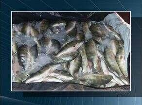 Polícia encontra 200 kg de peixe em carro e condutor é preso em Araguaçu - Polícia encontra 200 kg de peixe em carro e condutor é preso em Araguaçu