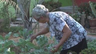 Idosa de 70 anos mostra que tem disposição apesar da idade - Maria Aparecida cozinha no fogão a lenha, cultiva uma horta e ainda pintou toda a casa onde mora.