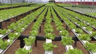 A hidroponia e a escassez de água - É possível produzir nesse sistema e ainda economizar água. A hidroponia, também conhecida como plantio sem solo, é uma técnica de plantio que utiliza bandejas com água para o desenvolvimento das plantas.