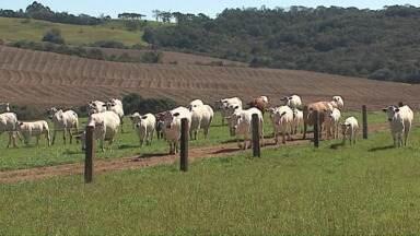 Assista ao 2º bloco do Caminhos do Campo do dia 27 de setembro de 2015 - Saiba mais sobre a criação do gado Canchim que tem ganhado mercado e se surpreenda com a história dos leitõezinhos adotados pela cadela 'Morena'