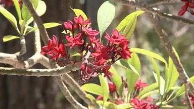 Primavera aquece mercado no setor de floricultura com flores tropicais - Primavera aquece mercado no setor de floricultura com flores tropicais