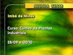 Confira quais os cursos oferecidos pelo Senar - em Conselheiro Pena, entre os dias 29 de setembro a 02 de outubro, será ministrado o curso Doma Racional de Equídeos.