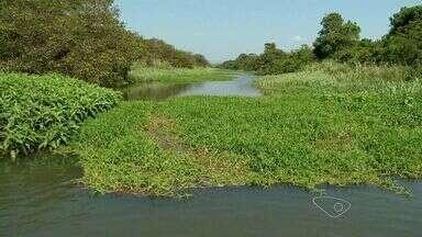 Ambientalista afirma que Rio Jucu está 'morto' no ES - Em muitas áreas não é possível passar de barco, por causa do baixo nível do rio.