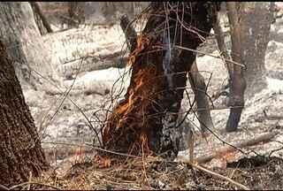 Incêndio destrói 400 hectares da Serra do Mel, em Montes Claros - Brigadistas e homens do Corpo de Bombeiros trabalham no combate ao fogo que dura 15 dias.