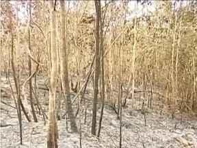 Controlado incêndio em área de preservação ambiental no Vale do Mucuri - Cerca de 200 hectares foram destrídos pelo fogo.