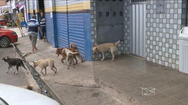 Mosquito transmissor do calazar preocupa Centro de Controle de Zoonoses em São Luís - O calazar é transmitida por cães e gatos é doença, e pode ser grave em seres humanos.