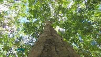 Geografia mapeia biomas ameaçados de extinção, os 'hot spots' geográficos - Dos 34 'hot spots' do mundo, dois estão no Brasil: a mata atlântica e o cerrado