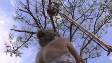 """Mulher """"bate o pé"""" para que árvore não seja cortada no centro de Foz - A confusão durou mais ou menos uma hora."""