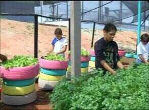 Alunos de escola aprendem como reciclar produzindo alimentos em Araguaína - Alunos de escola aprendem como reciclar produzindo alimentos em Araguaína