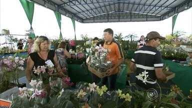 Evento traz novidades do mundo das orquídeas para Várzea Paulista - O mundo das orquídeas parece inesgotável, sempre tem uma novidade. A planta é tema de uma exposição em Várzea Paulista. Na Orquivárzea estão presentes, por exemplo, a orquídea fantasma.