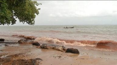 Mais de 200 bois mortos se espalham nas margens de rio no interior do Pará - Há quase uma semana, navio com cinco mil cabeças de gado afundou. Moradores da região receberam máscaras para suportar mau cheiro.