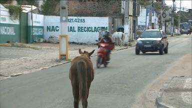 Veículos disputam espaço com cavalos em Maceió - Os animais circulam livremente pelas ruas da cidade, levando perigo aos motoristas.