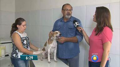 Campanha de vacinação anti-rábica começa hoje em João Pessoa - Veterinária fala sobre a importância dessa vacina, que deve ser aplicada anualmente nos animais.