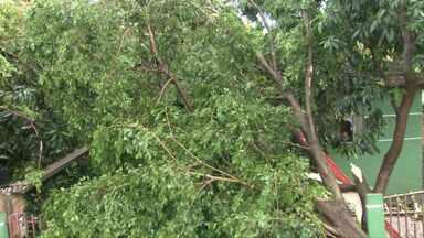 Chuva despenca acompanhada de ventos fortes na fronteira. - Árvores caíram pelas ruas e até em cima das casas.