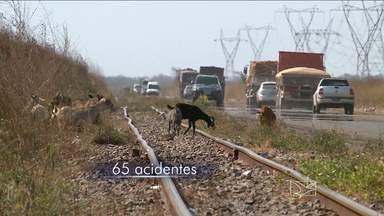 Número de acidentes causados por animais tem redução, diz PRF - Número de acidentes causados por animais tem redução, diz PRF