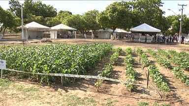 Aberta em Caxias a 2ª edição da Feira Agritec - O evento traz novidades nas áreas da agricultura e pecuária.