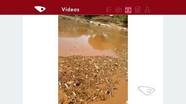 Morador filma e envia ao ES imagens da situação do Rio Doce em Minas Gerais - Ele enviou o vídeo através do aplicativo da TV Gazeta.