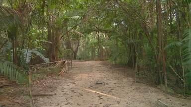 Perna humana é encontrada em trilha no Parque do Mindu, em Manaus - Membro foi localizado por turista que caminhava no local.