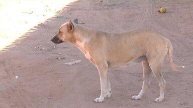 Veja quais os cuidados para prevenir o calazar, doença transmitida pelos cães - Veja quais os cuidados para prevenir o calazar, doença transmitida pelos cães