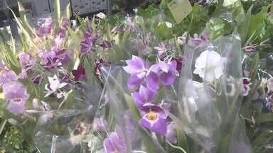Festival Flores de Holambra está sendo realizado em Porto Velho - A sétima edição do festival traz flores e plantas exóticas.